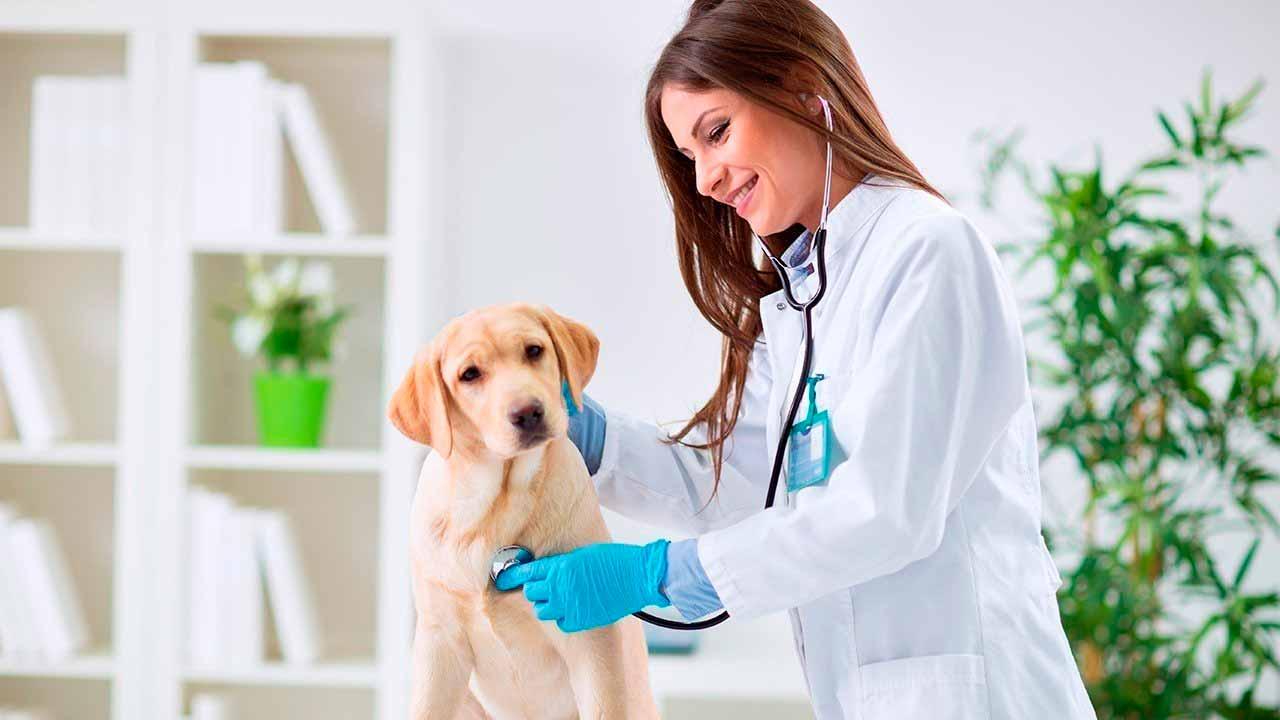 Seguro Petshops e Clinicas Veterinárias